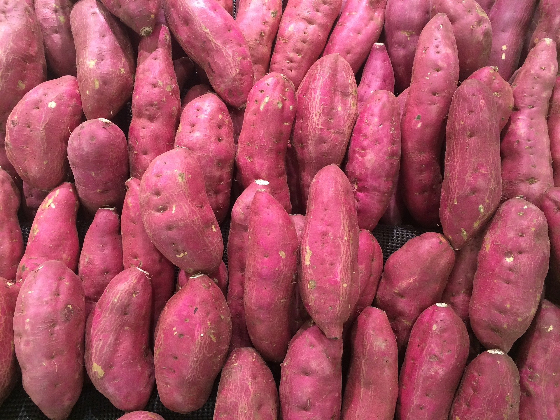 sweet-potato-for-weight-loss